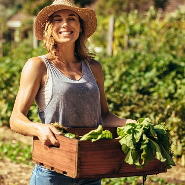 Frau erntet Bio Lebensmittel