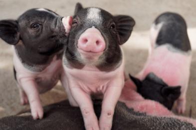 vegan für die Tiere, Tierliebe, Tierrechte