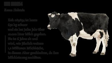 Kühe in der Milchindustrie