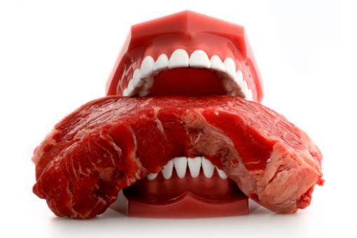 ohne fleisch leben